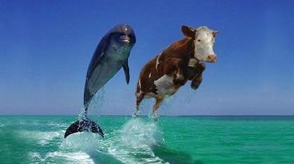 Koe dolfijn_2