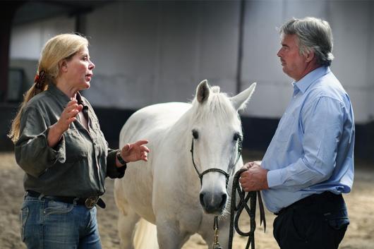 paarden coaching